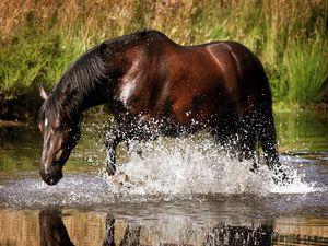 Пазлы - лошадь