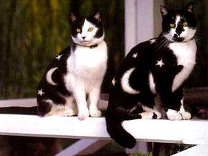 Боди-арт животных. Body-art на кошках. Роспись по телу, рисунки на теле, рисунки на животных, рисунки на кошках