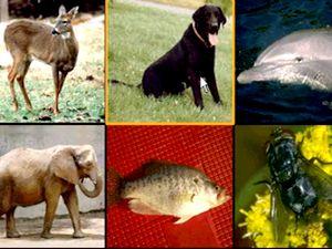 Учим английский язык - тема Животные, звери, птицы, рыбы, видео уроки английский язык, английский для детей, английский бесплатно, английский для начинающих, русско-английский словарь тема животные, птицы, звери, рыбы