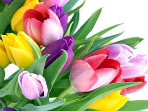 Сценарий праздника 8 марта для учителей, сценарий праздника 8 марта, сценарий праздника 8 марта для старшеклассников, сценарий праздника 8 марта старшие классы, поздравления с 8 марта, 8 марта поздравления, 8 марта сценарии
