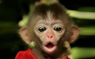 Символ 2016 года - обезьяна